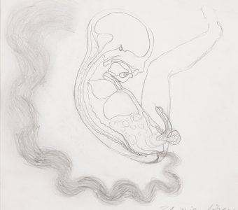 LIBERA ZBIGNIEW - bez tytułu [rysunek]