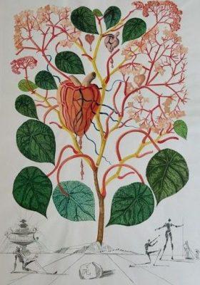 DALI SALVADOR Begonia [litografia, sygnowana]